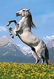 Пазл на 500 деталей «Лошадь Пасо Фино», В-51458, купить