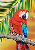 Пазл на 500 деталей «Попугай Ара», В-51724, фото