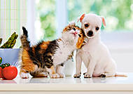 Пазл на 500 деталей «Щенок и котенок», В-51687