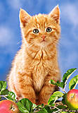 Пазл на 60 деталей «Рыжий котёнок», B-06427, купить