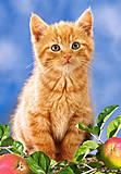 Пазл на 60 деталей «Рыжий котёнок», B-06427