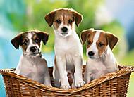 Пазл на 60 деталей «Три щенка в корзине», B-06458, фото