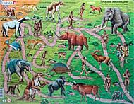 Пазл рамка-вкладыш «Теория эволюции», HL3, фото