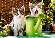 Пазл Castorland на 1000 деталей «Котята и лейка», 2105