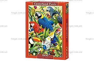 Пазл Castorland на 1000 деталей «Попугаи», 3041