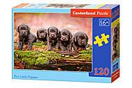Пазлы Castorland 120 midi «Пять маленьких щенков», В-13418, купить