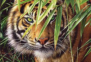 Пазл Castorland на 1500 деталей «Взгляд тигра», 816