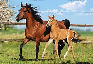 Пазл Castorland на 260 деталей «Лошади», В-26784
