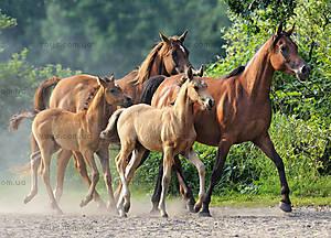 Пазл Castorland на 260 деталей «Семейство лошадей», В-27194