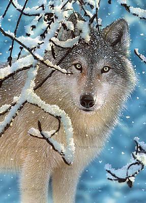 Пазл Castorland на 260 деталей «Волк в зимнем лесу», В-27224