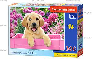 Пазл Castorland на 300 деталей «Щенок в розовой коробке», 071, купить