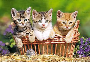 Пазл Castorland на 500 деталей «Три котёнка в корзине», 1168