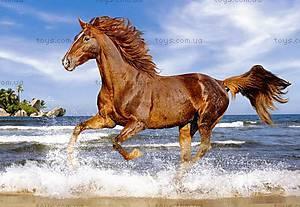 Пазл Castorland на 500 деталей «Лошадь на пляже», 1175