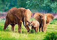 Пазл Castorland на 500 деталей «Слоны», 2196, фото
