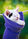 Пазл Castorland на 500 деталей «Котёнок в носке», В-51595, фото