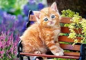 Пазл Castorland на 500 деталей «Рыжий котенок», В-52240