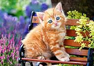 Пазл Castorland на 500 деталей «Рыжий котенок», В-52240, фото