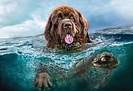 Пазлы Castorland на 1000 деталей «Пес в воде», С-103478, фото