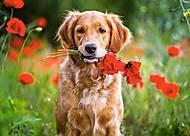 Пазлы Castorland на 180 деталей «Цветы для тебя», В-018284, купить