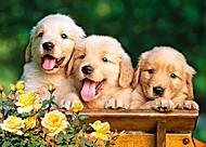 Пазл Castorland на 180 деталей «Три щенка», В-018062, купить