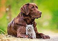 Пазлы миди «Собака и котенок», В-13326