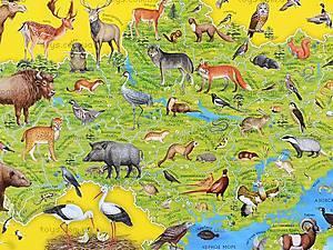 Детский плакат-карта «Животные Украины», 0193а, купить