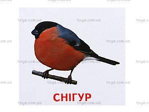 Раздаточные карточки «Животные и птицы Украины», 1020-113107008У, фото
