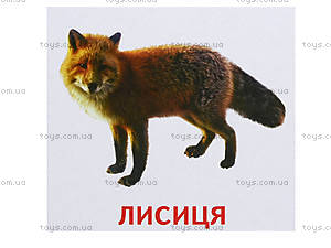 Раздаточные карточки «Животные и птицы Украины», 1020-113107008У, игрушки