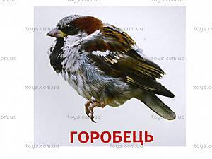 Раздаточные карточки «Животные и птицы Украины», 1020-113107008У, детские игрушки