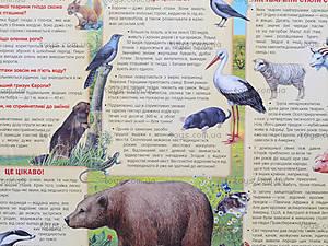 Умные пазлы «Животный мир», 6311, фото