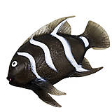 Рыба тянучка черная, A029P, отзывы