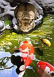 Рисование картины по номерам «Карпы и Котик», КНО2437, фото