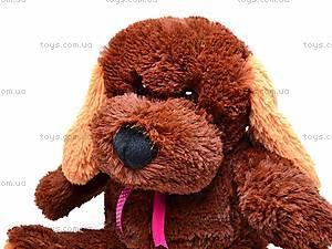 Собака Барбос, 4131, фото