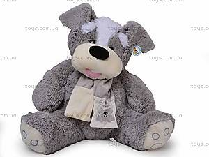 Собака с шарфом , ABY29510