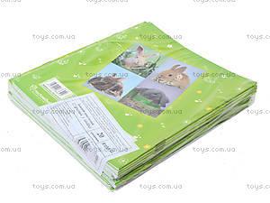 Тетрадь линия, 12 листов, R14-234K, купить