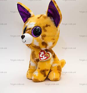 Мягкая игрушка «Чихуахуа Pablo» серии Beanie Boo's, 37066, купить