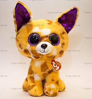 Мягкая игрушка «Чихуахуа Pablo» серии Beanie Boo's, 37066