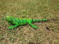 Игуана зеленая 51 см, 21390, отзывы