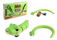Змея на управлении , 8904, фото